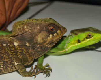 A Vivarium Home for a Tiger Salamander