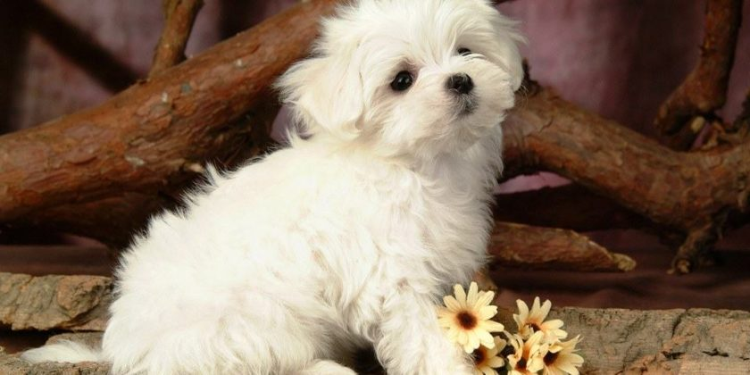Caring For Your Puppy - Things That You Should Know About Puppy Care