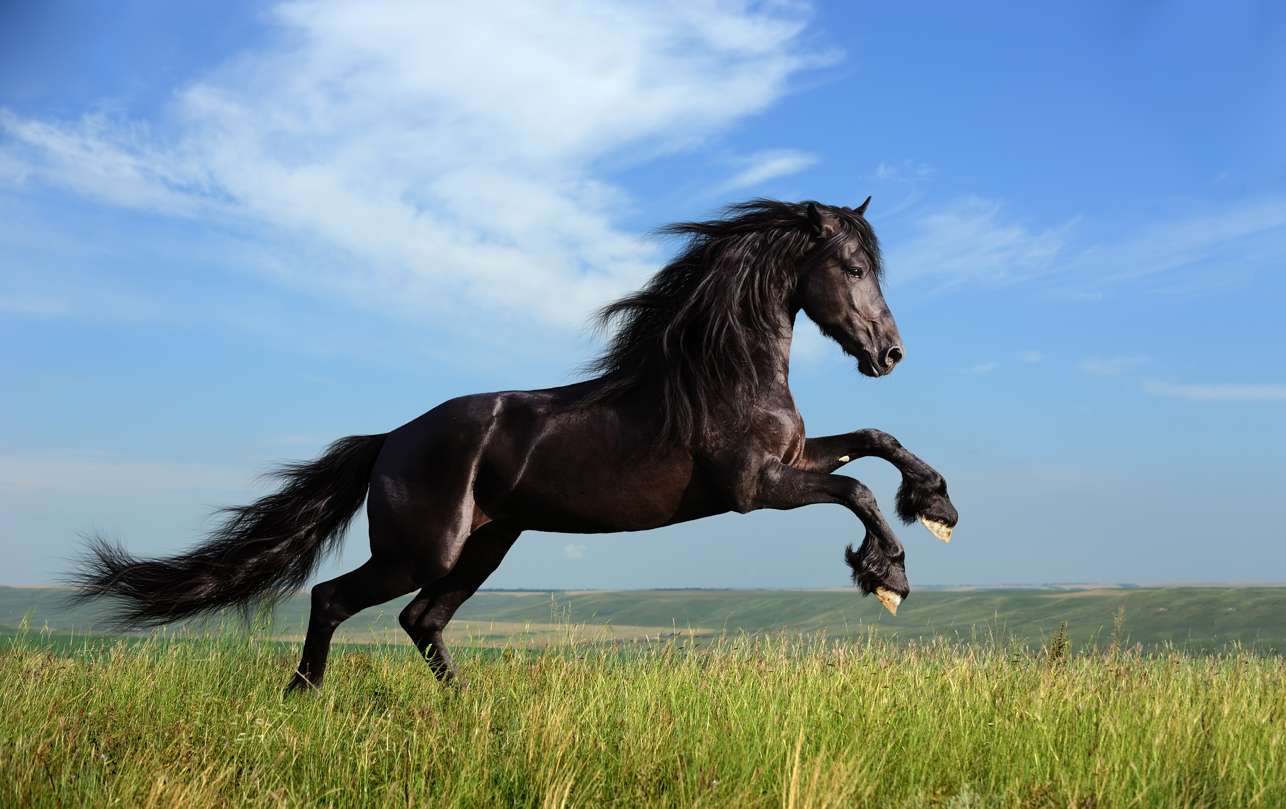 Consulting And Choosing a Contractor For Horse Fencing And Build a Fence For Horses