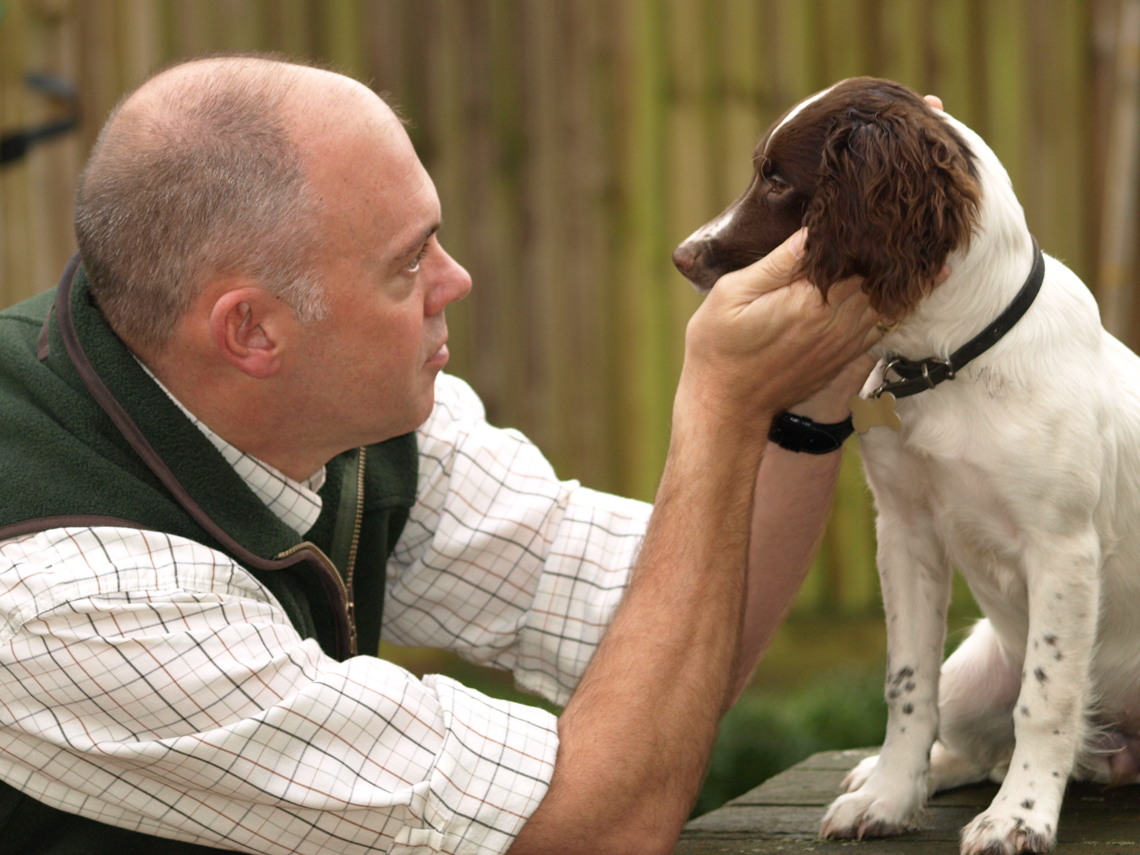 Dog Dementia - When to Put Down Your Dog