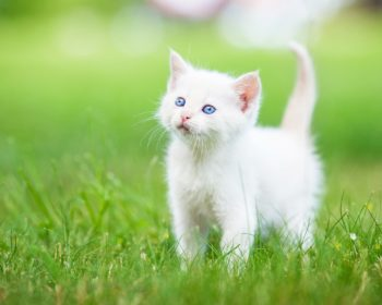 Feeding Your Cat - Everything You Need To Know