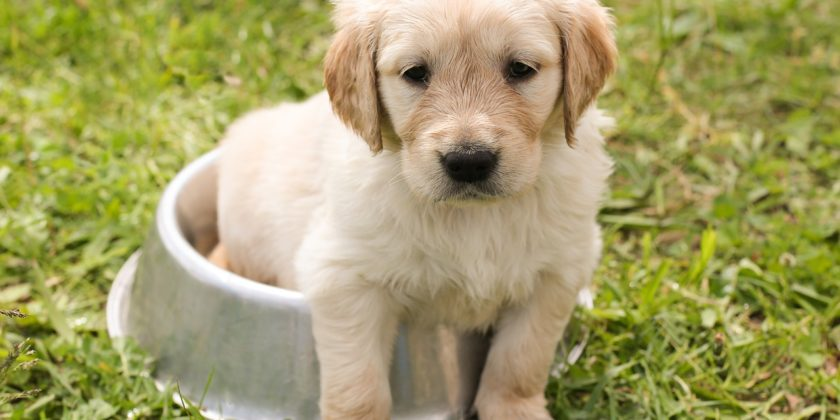 First Year Puppy Care - Have You Thought About It?