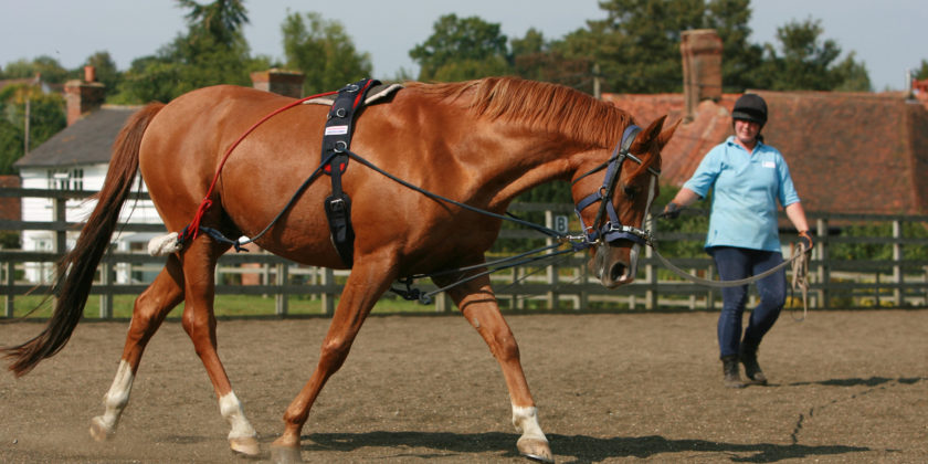 Horse Tack And Horse Riding Equipment Western or English? - The Basics