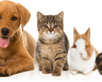 Looking For The Ideal Dog Breeder