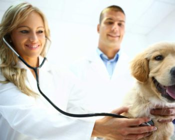 Pain Killers to Relieve Dogs From Pains