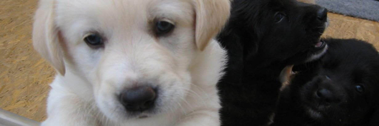 Puppy Care - 5 Things New Dog Owners Should Know
