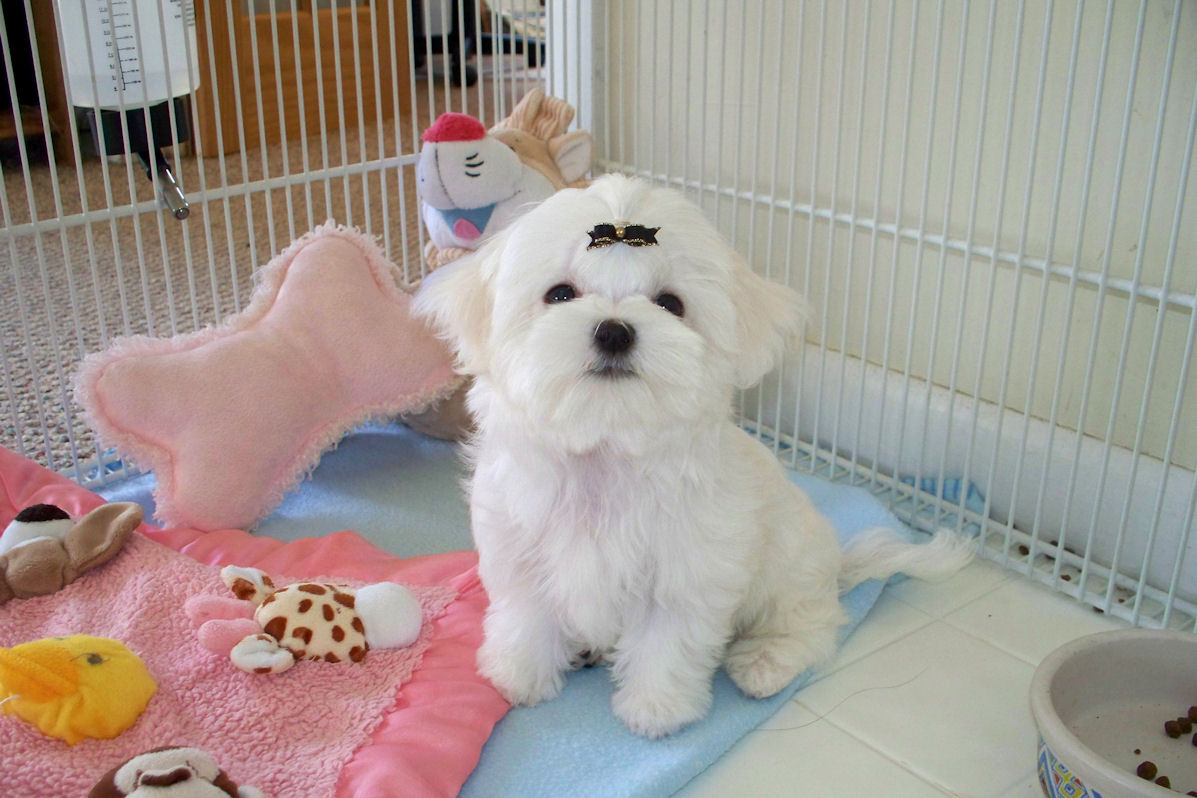 Puppy Care - How Should a Dog Parent Prepare For the New Arrival?