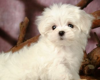 Puppy Care - Raising Your Puppy