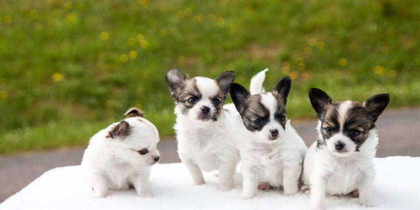 Puppy Care and Training - A Brief Guide