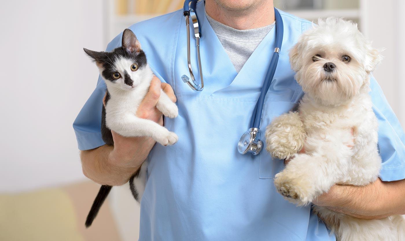 Should You Buy Cheap Pet Meds Online?