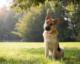 Should You Consider Investing in Vegan Dog Food?