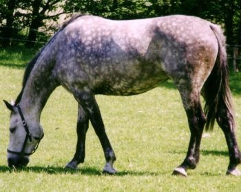 Step by Step - Teach Your Horse to Neck Rein