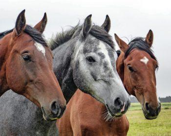 Stylish Horse Leather Accessories UK with Saddlery Hub