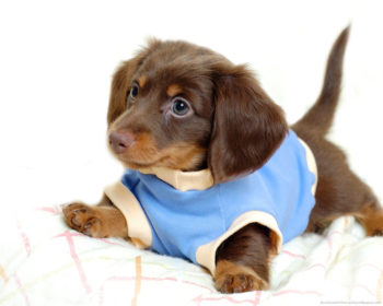 Top 3 Puppy Care Tips