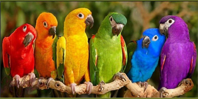 Top 5 Bird Psychos